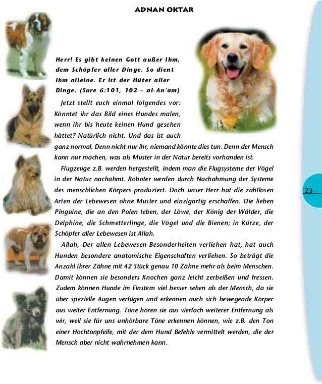 Fein Männliche Hunde Reproduktive Anatomie Bilder - Anatomie Von ...