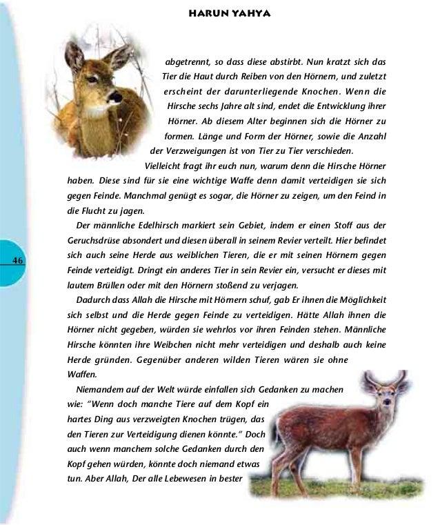 Niedlich Laubwald Tiere Färbung Seiten Zeitgenössisch - Entry Level ...