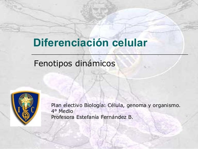 Diferenciación celularFenotipos dinámicosPlan electivo Biología: Célula, genoma y organismo.4° MedioProfesora Estefanía Fe...