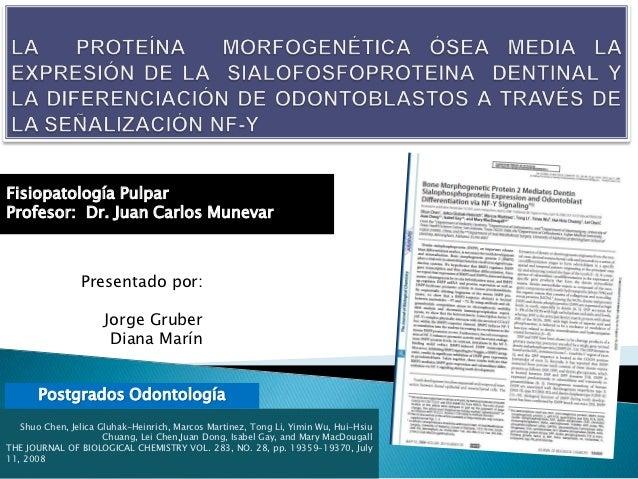 Fisiopatología PulparProfesor: Dr. Juan Carlos Munevar                Presentado por:                     Jorge Gruber    ...