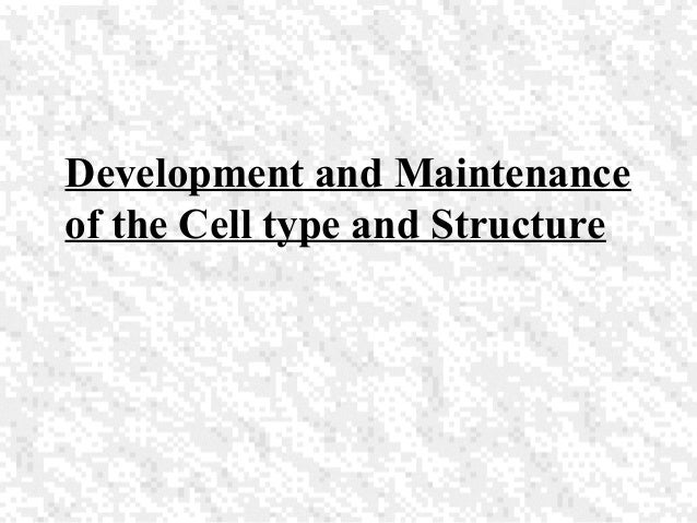 Development and Maintenance of the Cell type and Structure