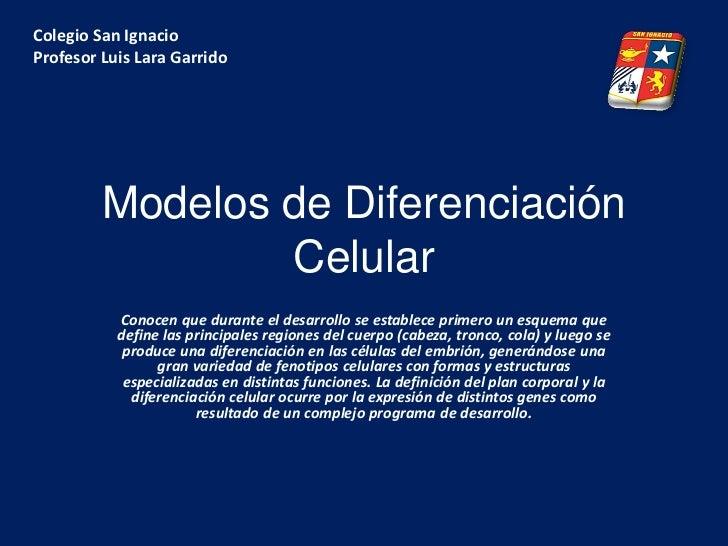 Colegio San IgnacioProfesor Luis Lara Garrido         Modelos de Diferenciación                 Celular           Conocen ...