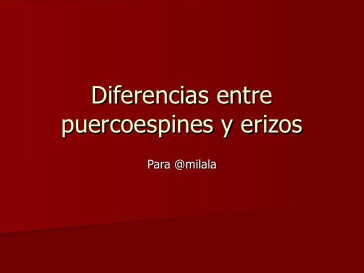 Diferencias entre puercoespines y erizos Para @milala