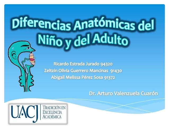 Diferencias anatómicas del niño y del adulto