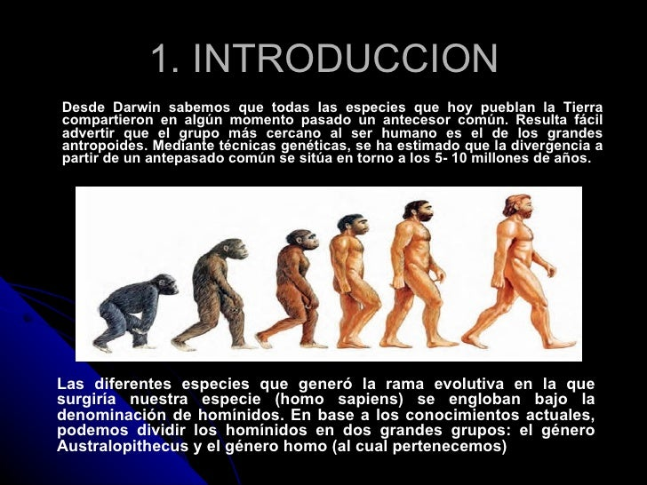 Diferencias Australopithecus Y Homo Slide 2