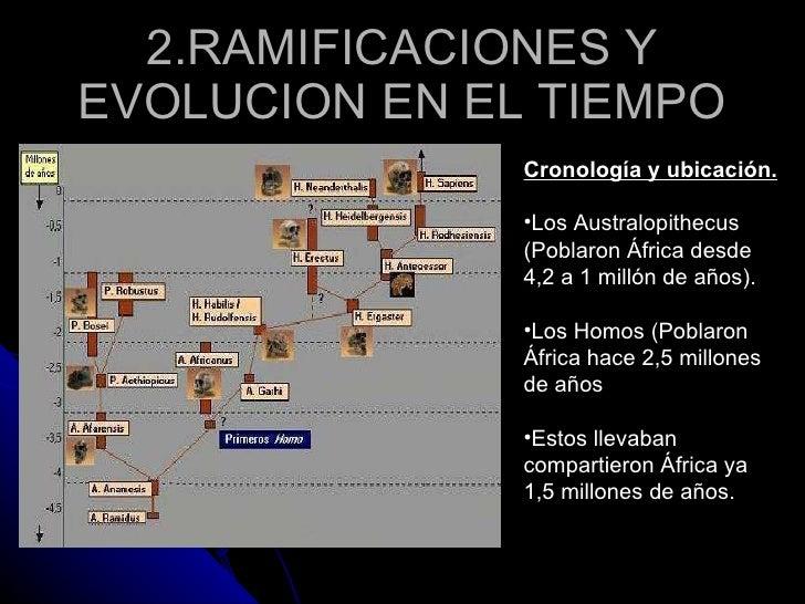 Diferencias Australopithecus Y Homo Slide 3