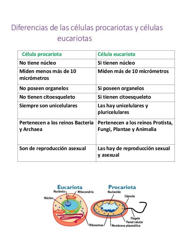Diferencias entre sexual y asexual