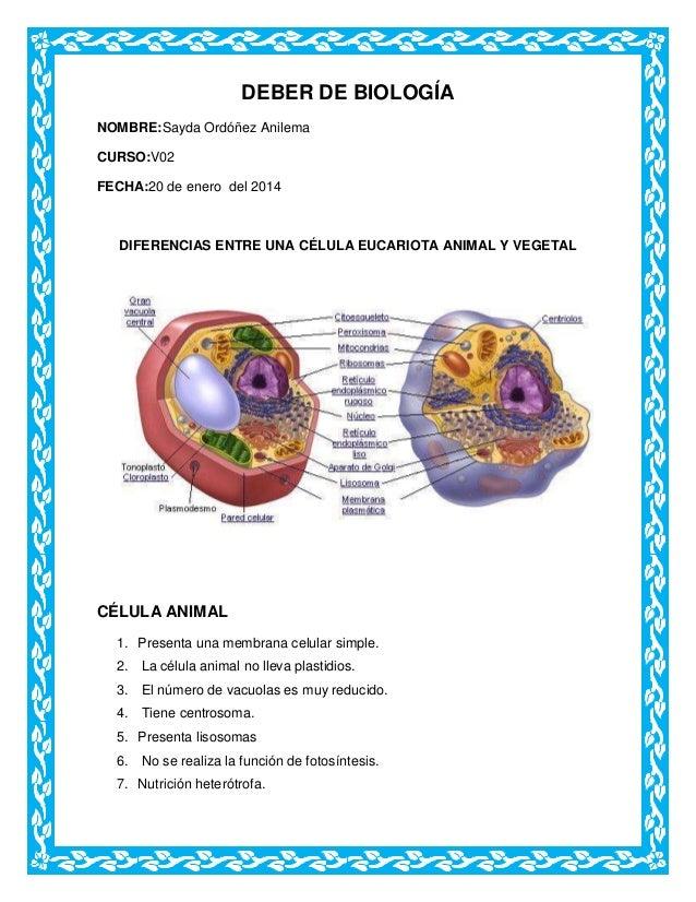 DEBER DE BIOLOGÍA NOMBRE:Sayda Ordóñez Anilema CURSO:V02 FECHA:20 de enero del 2014  DIFERENCIAS ENTRE UNA CÉLULA EUCARIOT...