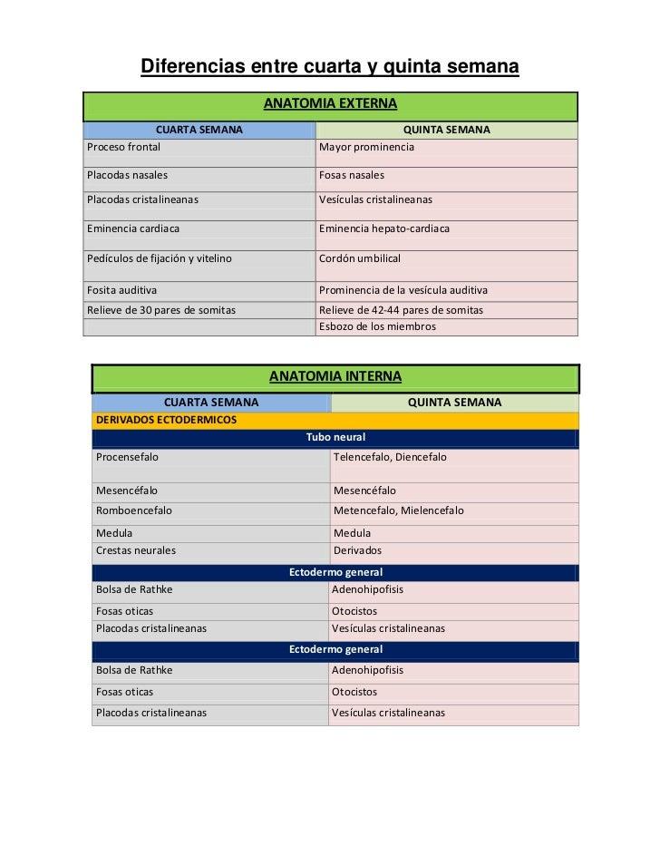 Diferencias entre cuarta y quinta semana                                   ANATOMIA EXTERNA              CUARTA SEMANA    ...