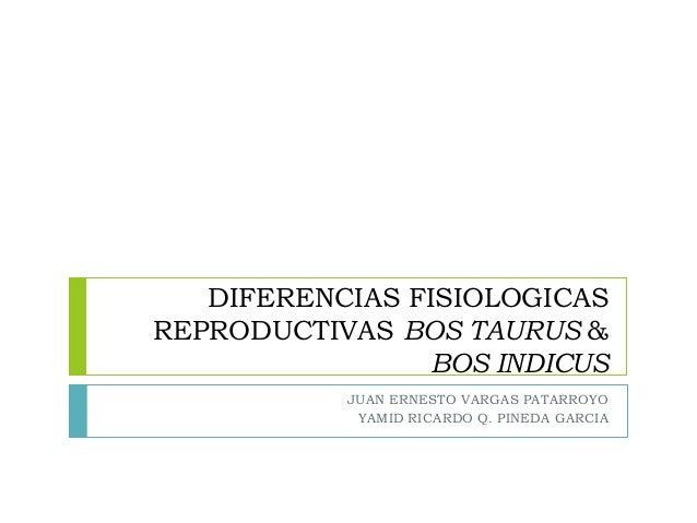 DIFERENCIAS FISIOLOGICAS REPRODUCTIVAS BOS TAURUS & BOS INDICUS JUAN ERNESTO VARGAS PATARROYO YAMID RICARDO Q. PINEDA GARC...