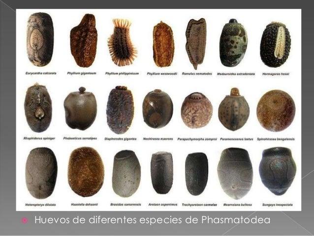 Diferentes tipos de huevos larvas y pupas de insectos - Bichos en casa fotos ...