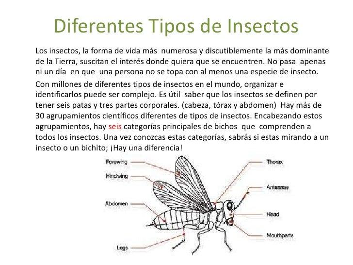 Diferentes Tipos de Insectos<br />Los insectos, la forma de vida más  numerosa y discutiblemente la más dominante de la Ti...