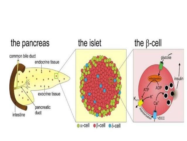 Diff Beta Cells