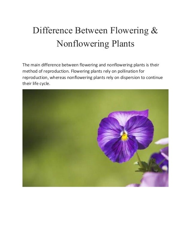 Difference Between Flowering Non Flowering Plants