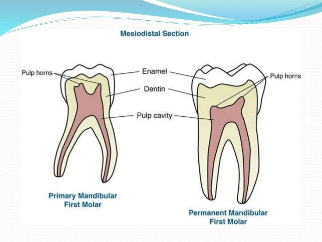 Difference between primary and permanent dentition permanent teeth primary teeth ccuart Image collections