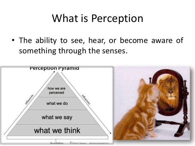 the role of perception in the The role of perception in the decision making process people's perceptions are influence by many different factors some of these factors are people's m.
