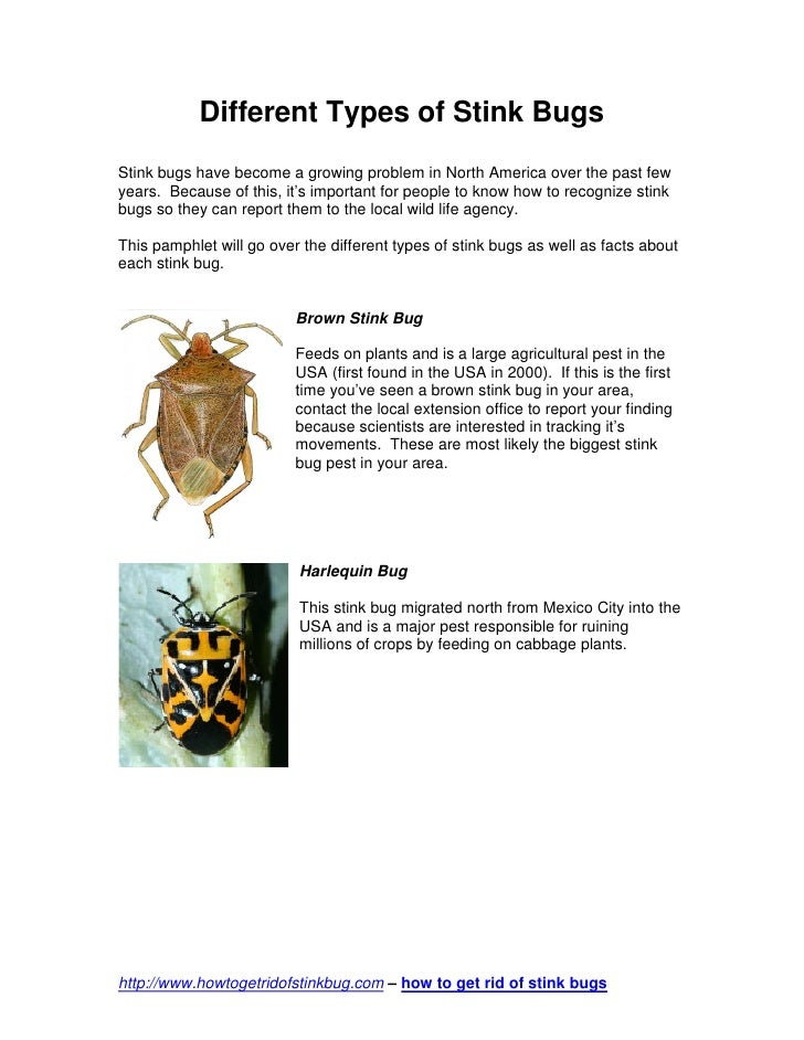 Different Types of Stink BugsStink bugs have become a growing problem in North America over the past fewyears. Because of ...