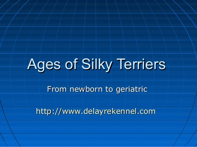 Ages of Silky Terriers   From newborn to geriatric http://www.delayrekennel.com