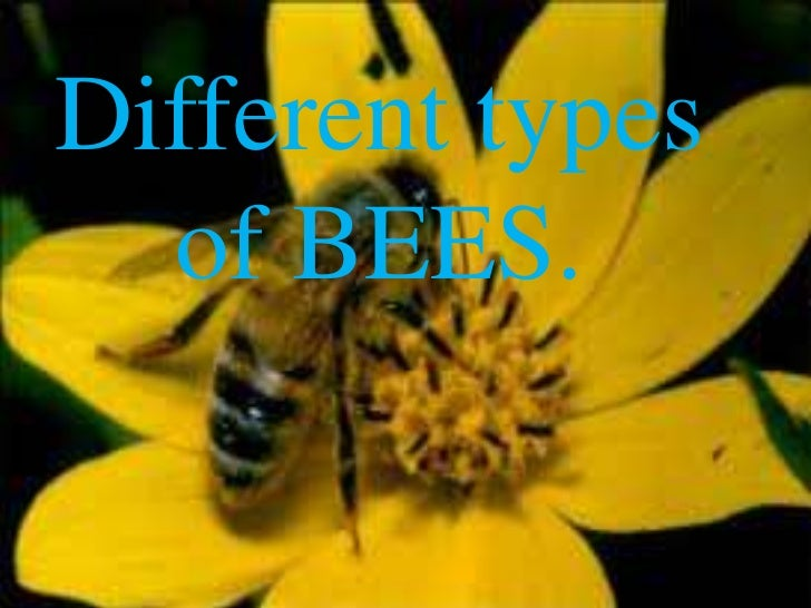 Different types  of BEES.