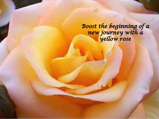 Colors of roses with their meanings flowerzncakez yellow rose 11 mightylinksfo