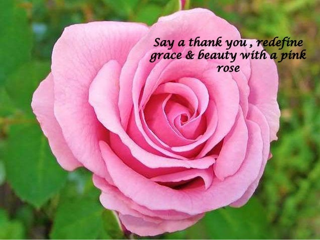 Colors of roses with their meanings flowerzncakez convey appreciation gratitude with a dark pink rose mightylinksfo