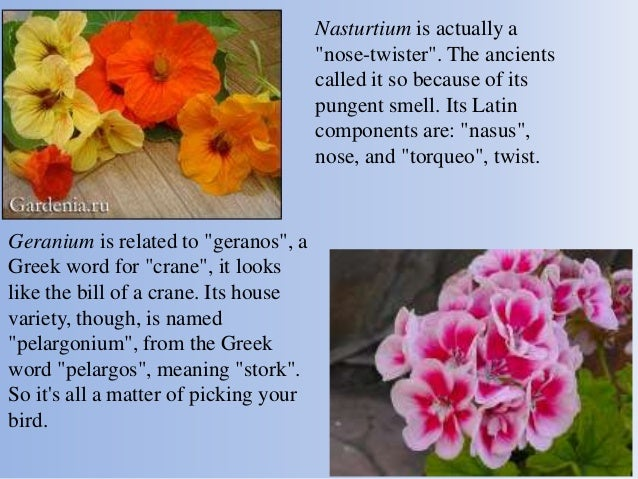 Different countries – similar flowers