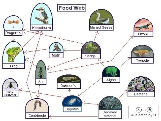 Different ecosystems
