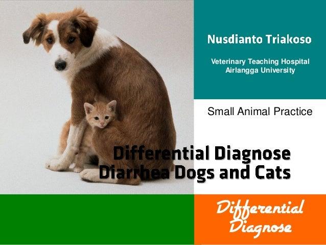 Veterinary Teaching Hospital Airlangga University  Small Animal Practice  Differential Diagnose