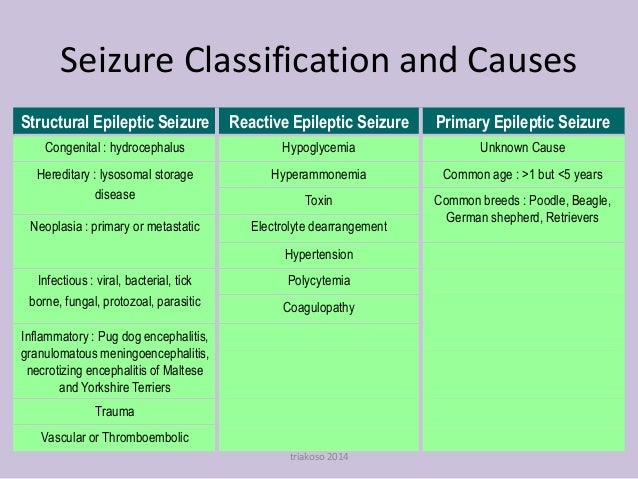 Differential Seizures - Small Animal Medicine