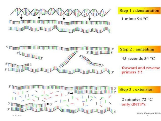 12: Visualizing and Characterizing DNA