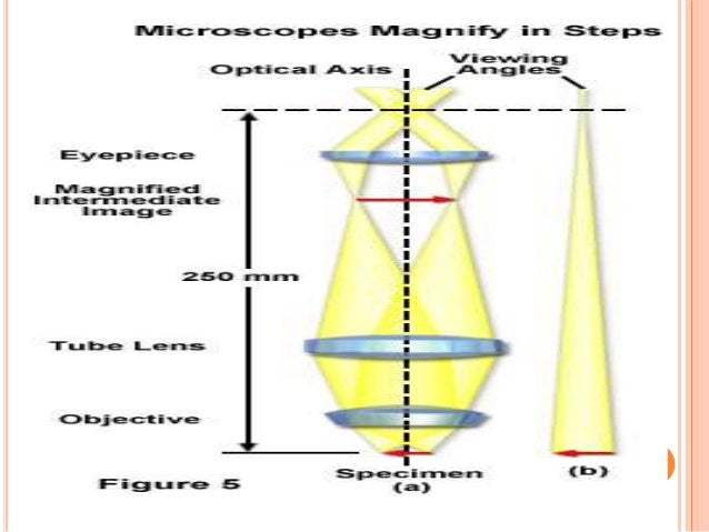 MODERN TECHNOLOGY IMPROVING MICROSCOPY  The invention of the microscope allowed scientists and scholars to study the micr...
