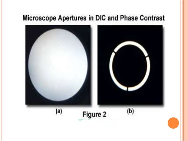 DIFFERENTIAL INTERFERENCE CONTRAST