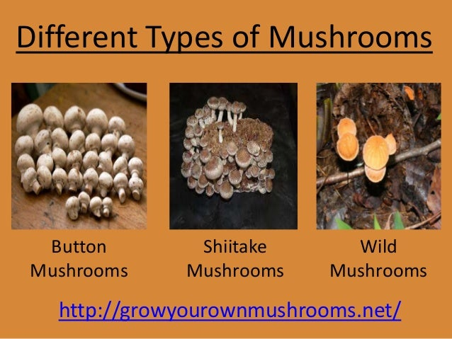 Different Types of Mushrooms Button Mushrooms Shiitake Mushrooms Wild Mushrooms http://growyourownmushrooms.net/