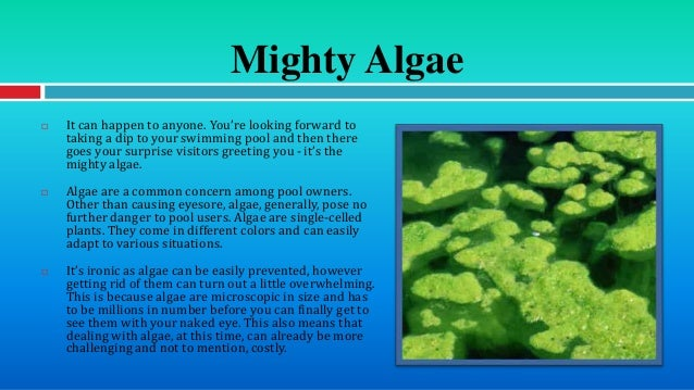 Different types of pool algae and how to deal with them for Can you swim with algaecide in pool