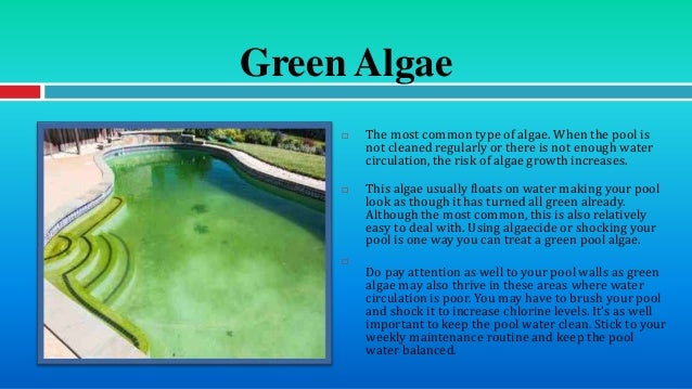 Different types of pool algae and how to deal with them for Different types of pools