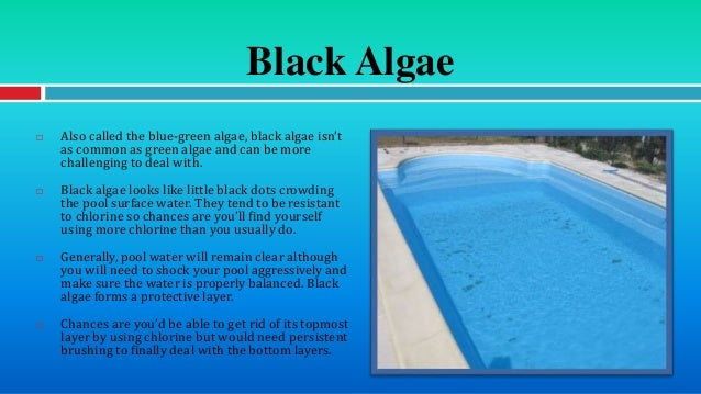Different types of pool algae and how to deal with them for Kill black algae swimming pool