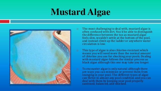 Image Gallery Mustard Algae