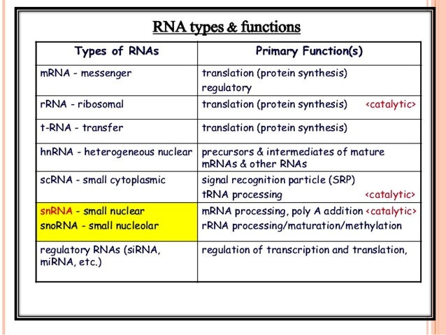 CONTD It contains only the coding information of the coding region of a gene flanked by 5' UTR & 3' UTR