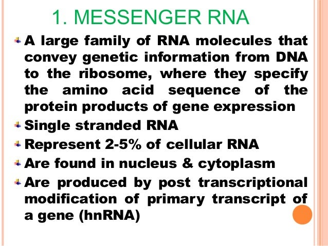 CONTD It represents 10-20% of cellular RNA Smallest RNA found in cytoplasm The structure of tRNA can be decomposed into it...