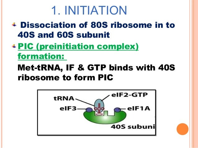 CONTD Facilitated by release factor (RF) / termination factor (TF) The polypeptide is released from the tRNA The tRNA is r...
