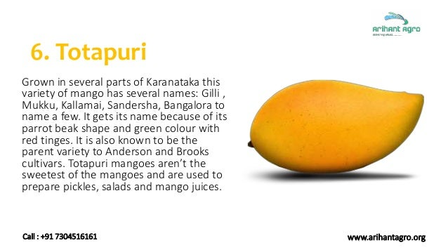 Different Varieties of Mangoes Exported from India | Fresh