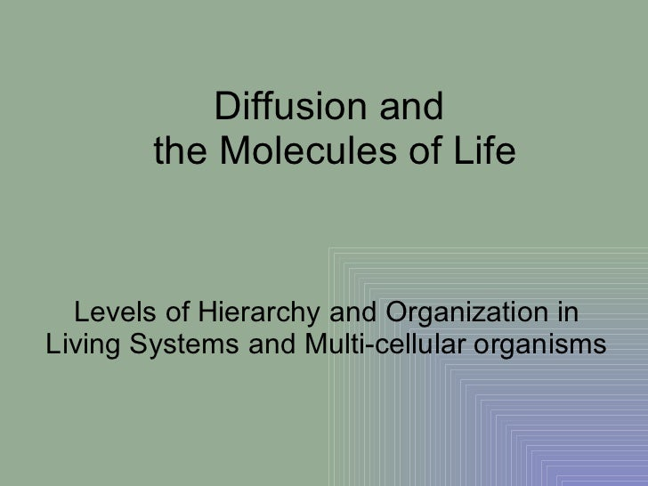 Diffusion and  the Molecules of Life Levels of Hierarchy and Organization in Living Systems and Multi-cellular organisms