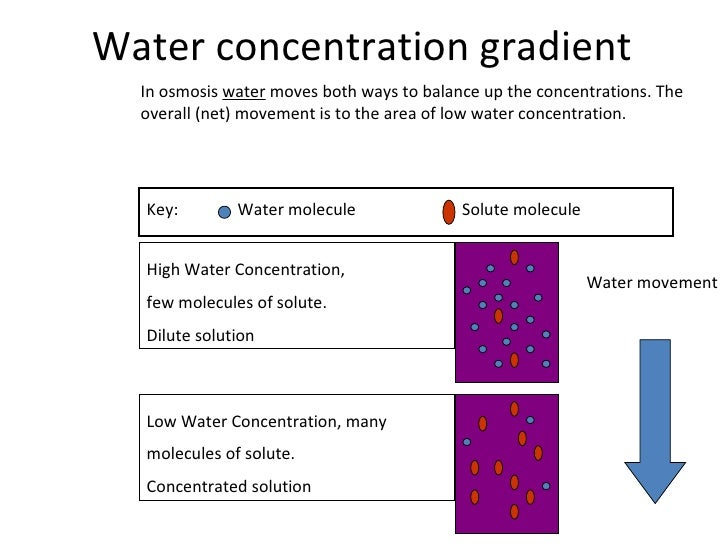 osmosis and diffusion amc essay This investigation will focus on passive transport, specifically simple diffusion and  osmosis in simple diffusion, molecules tend to spread out.