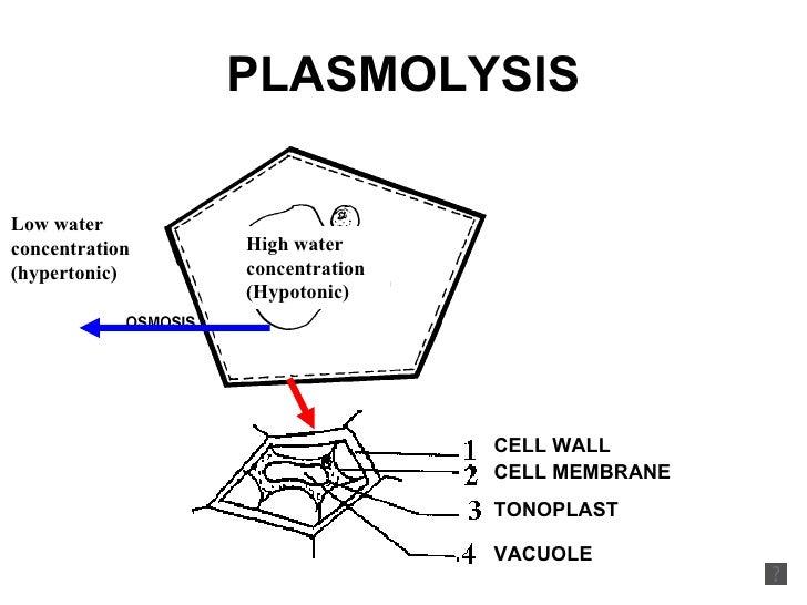 Plasmolysis - Plant water relation