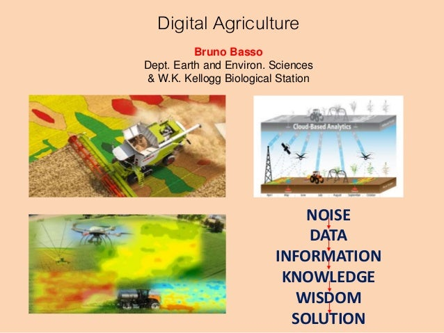 NOISE DATA INFORMATION KNOWLEDGE WISDOM SOLUTION Digital Agriculture Bruno Basso Dept. Earth and Environ. Sciences & W.K. ...