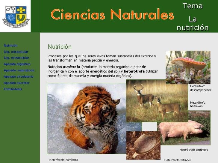 Ciencias Naturales Tema La nutrición Nutrición Procesos por los que los seres vivos toman sustancias del exterior y las tr...