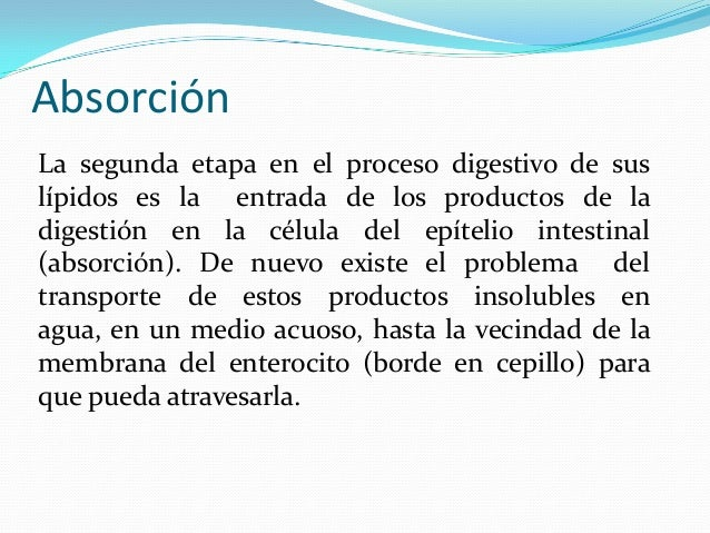 AbsorciónLa segunda etapa en el proceso digestivo de suslípidos es la entrada de los productos de ladigestión en la célula...