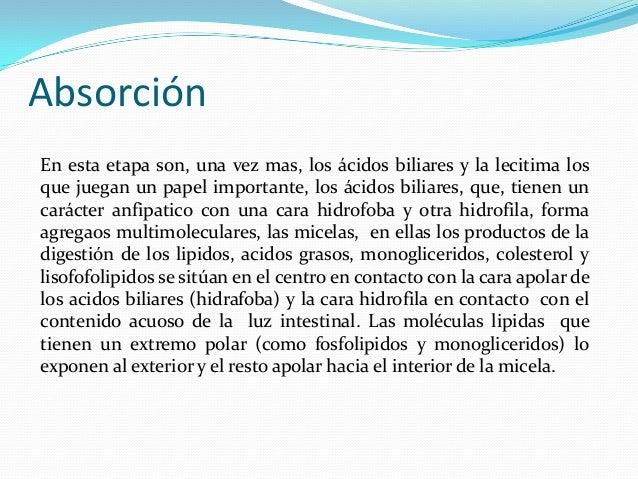 AbsorciónEn esta etapa son, una vez mas, los ácidos biliares y la lecitima losque juegan un papel importante, los ácidos b...