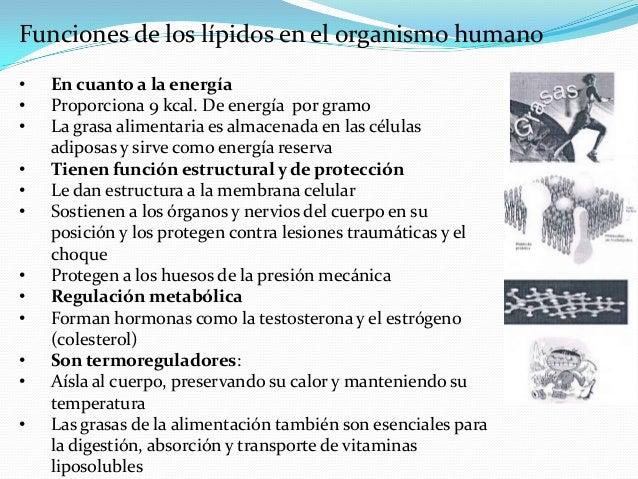 Funciones de los lípidos en el organismo humano•   En cuanto a la energía•   Proporciona 9 kcal. De energía por gramo•   L...