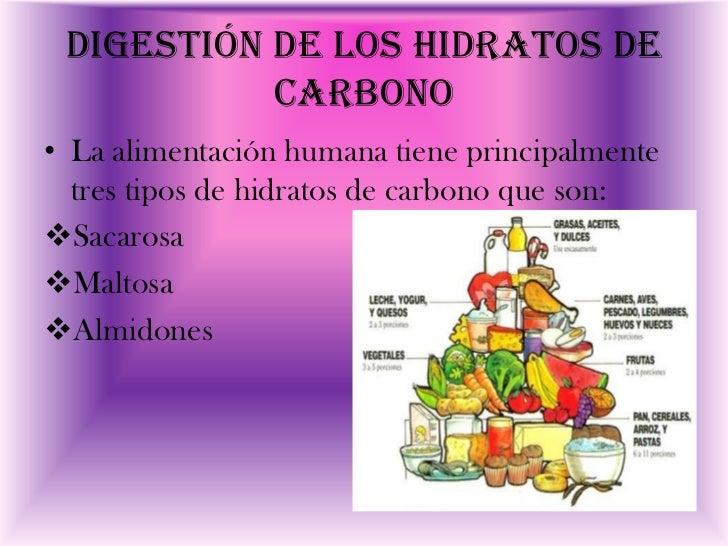 Digesti n y adsorci n de los hidratos de carbono listas - Alimentos hidratos de carbono ...